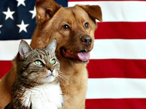 dog_cat_flag.jpg