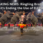 Ringling Brothers Stops Using Elephants
