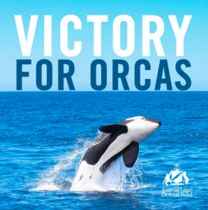 victory for orcas