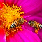 bees-extinction